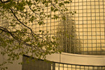 Tree_reflection_2